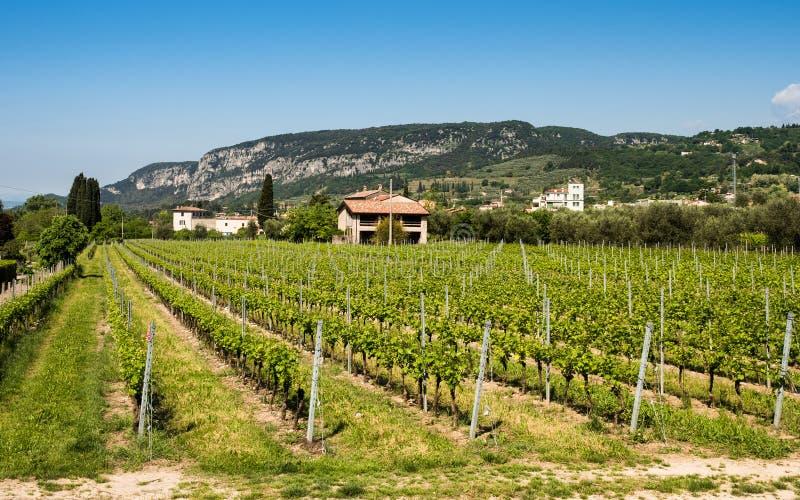 Viticultura cerca del lago Garda, Italia imagenes de archivo