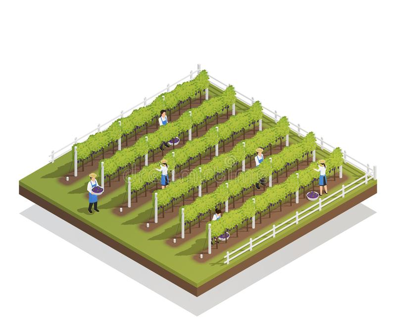 Viticulture Isometric Composition stock illustration