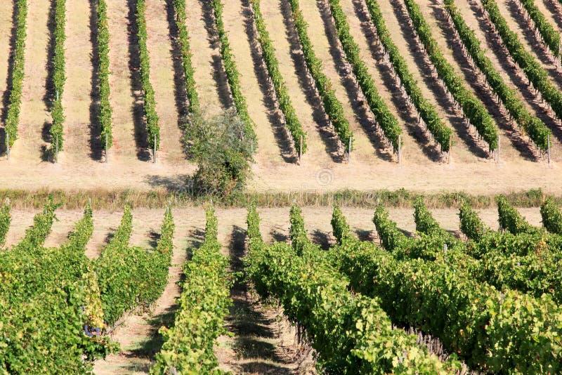 Viticulture na região italiana de Toscânia imagens de stock