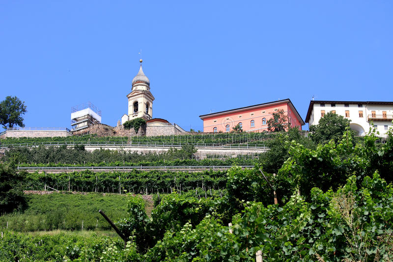 Viticulture près de Cembra dans les dolomites de l'Italie photographie stock