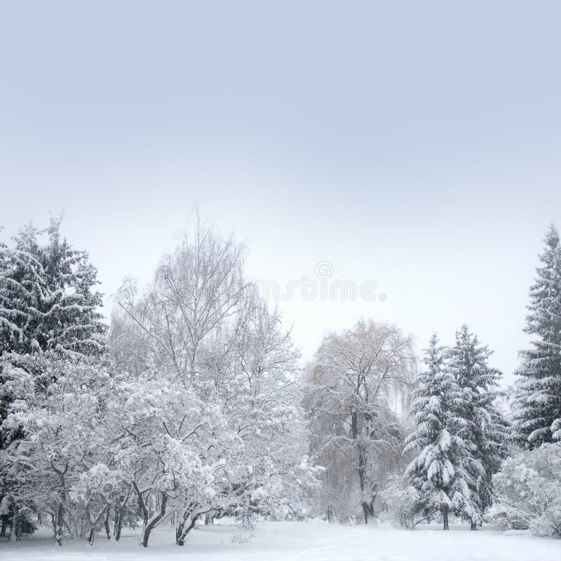 Vitjulskog med snow arkivfoto