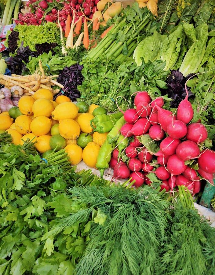 Vitlök citronen, dill, rädisan, basilika, pepparrot, rotar, rovor, beta, salladslökar, grönsallat, spenat, syra, chili som är söt royaltyfria foton