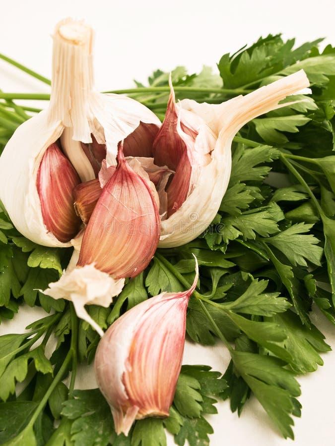 Vitlök och parsley arkivbilder