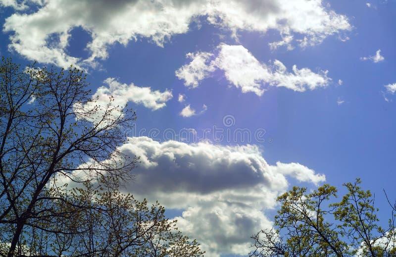 Vitmoln och trädfilialer mot den blåa himlen royaltyfri bild