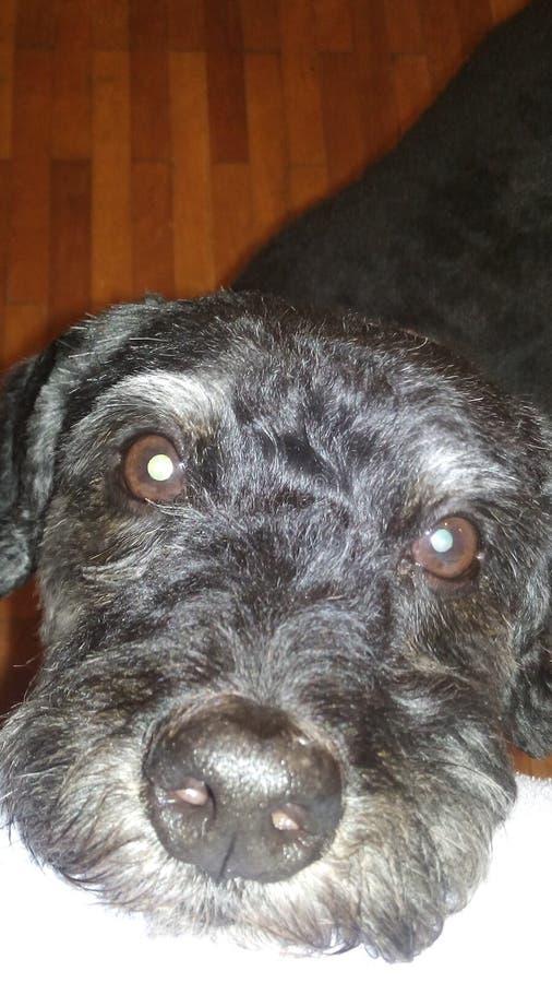 Vito το σκυλί στοκ εικόνα