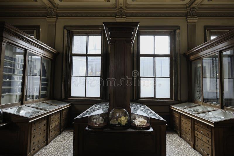 Vitrina com fósseis e cristais no museu fotos de stock royalty free