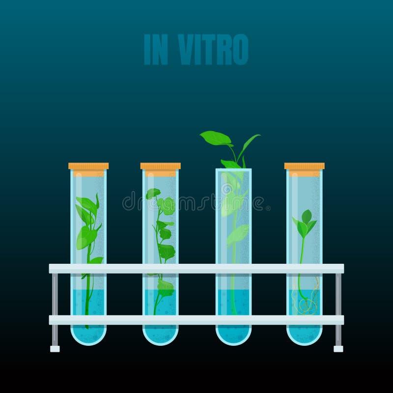 In vitro plant tissue culture. Plants in test tubes. Vector illustration on dark background stock illustration