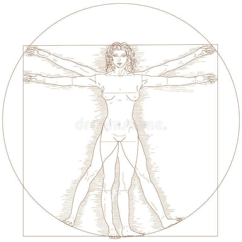 vitruvian женщина иллюстрация вектора