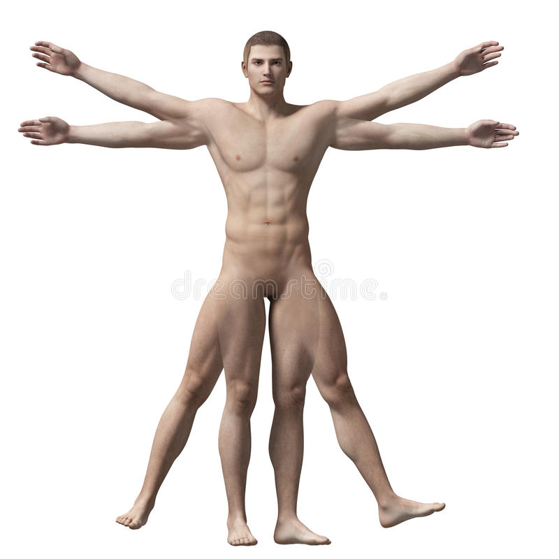 Vitruvian человек иллюстрация вектора