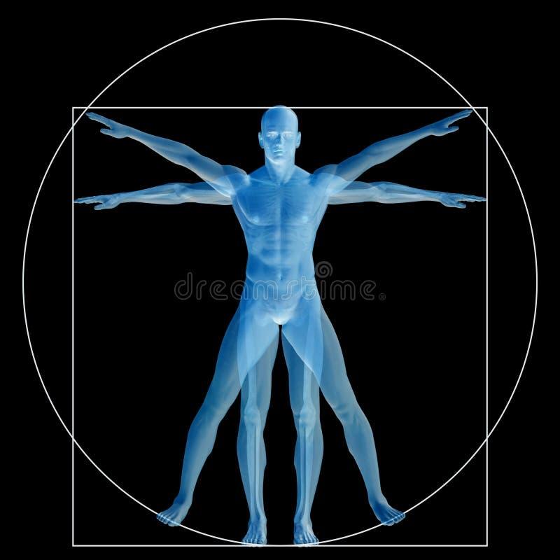 Vitruvian human or man conceptual 3d proportion anatomy body vector illustration
