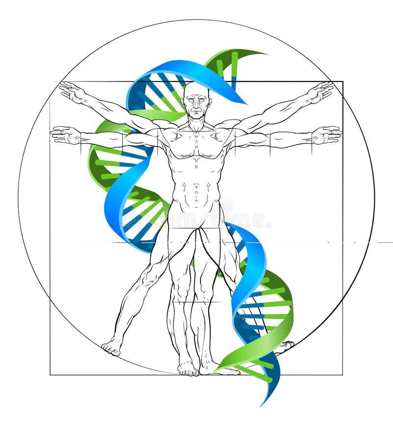 Vitruvian mężczyzna DNA ilustracja wektor