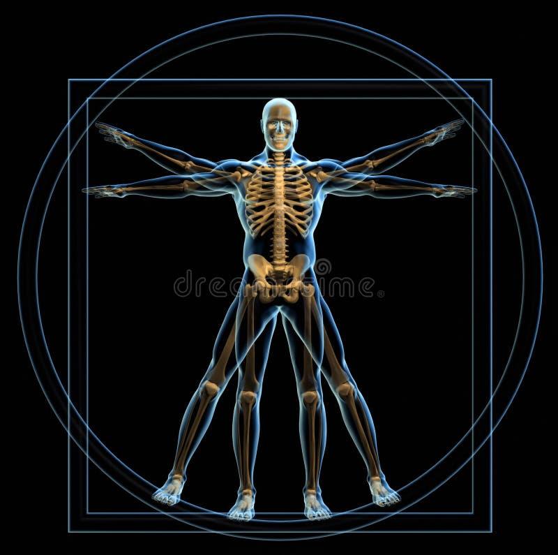Vitruvian Mann lizenzfreie abbildung