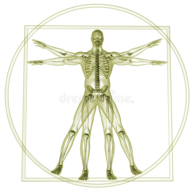 Vitruvian Mann vektor abbildung