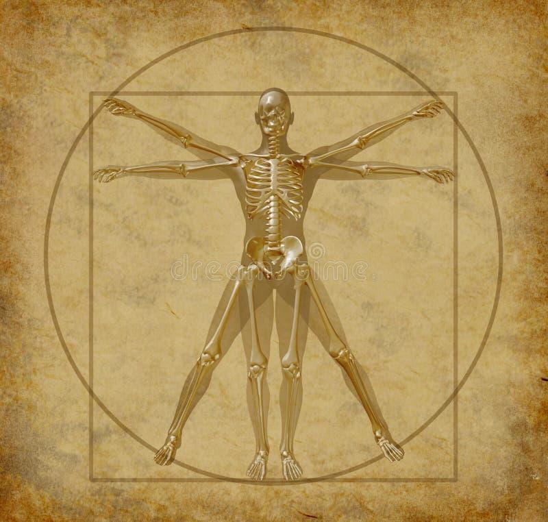 Vitruvian-menselijk-diagram stock illustratie