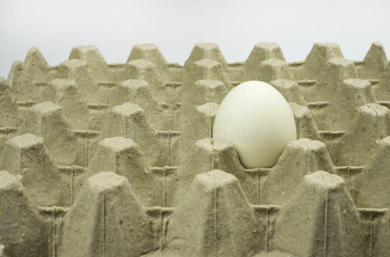 Vitt ägg i pappers- magasin royaltyfri fotografi