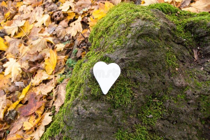 Vitt hjärta på sten täckt med mossa royaltyfri bild