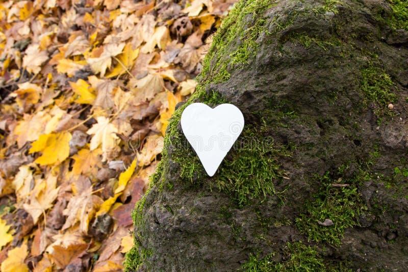 Vitt hjärta på sten täckt med mossa fotografering för bildbyråer