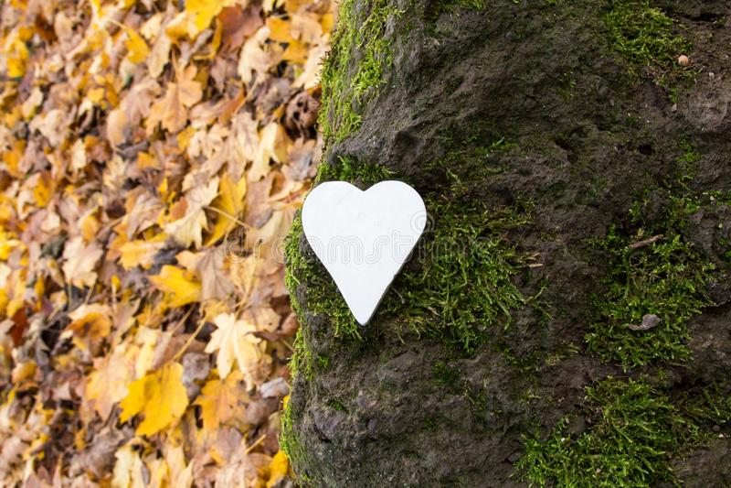 Vitt hjärta på sten täckt med mossa royaltyfri foto