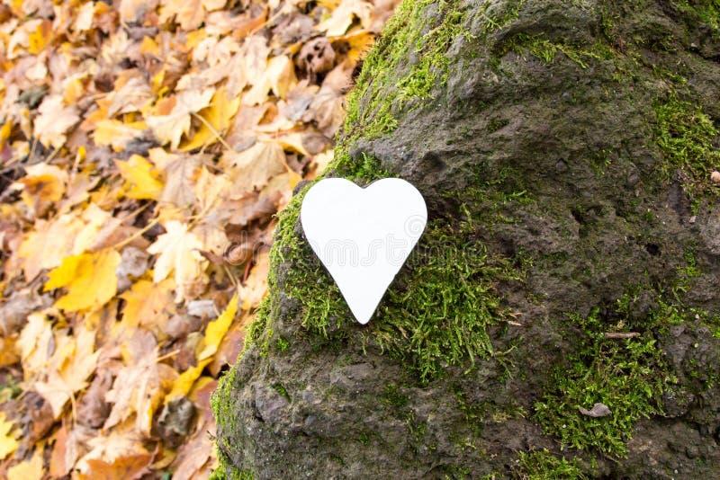 Vitt hjärta på sten täckt med mossa royaltyfria bilder