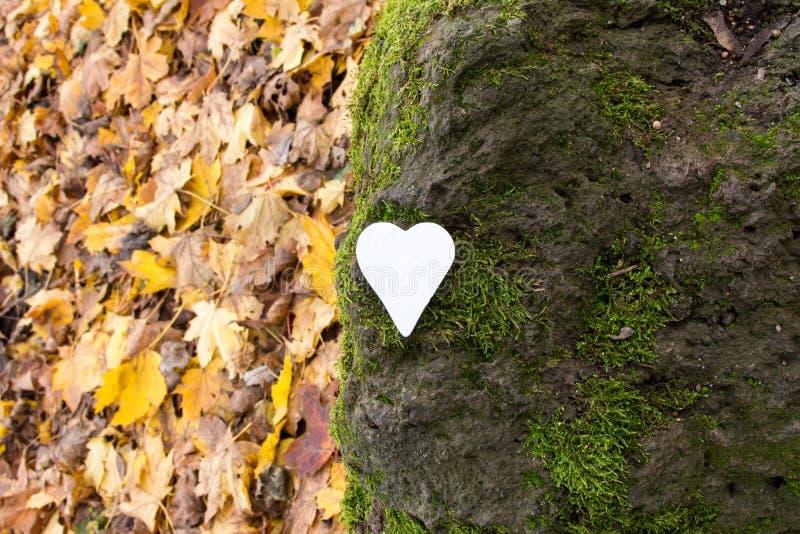 Vitt hjärta på sten täckt med mossa royaltyfri fotografi