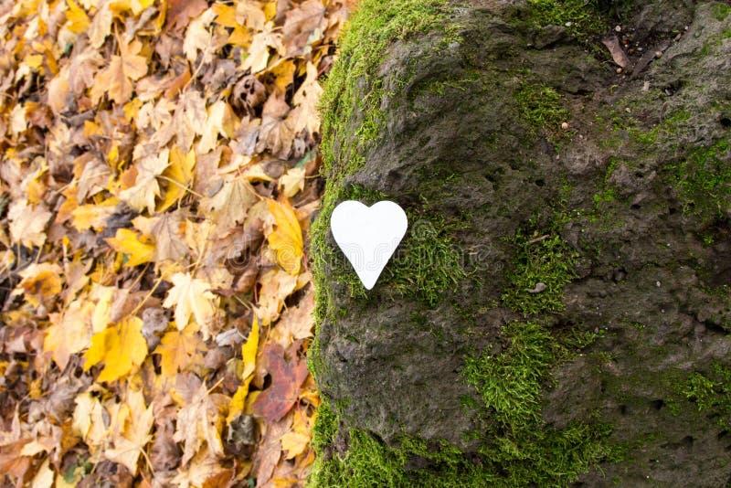 Vitt hjärta på sten täckt med mossa arkivbilder