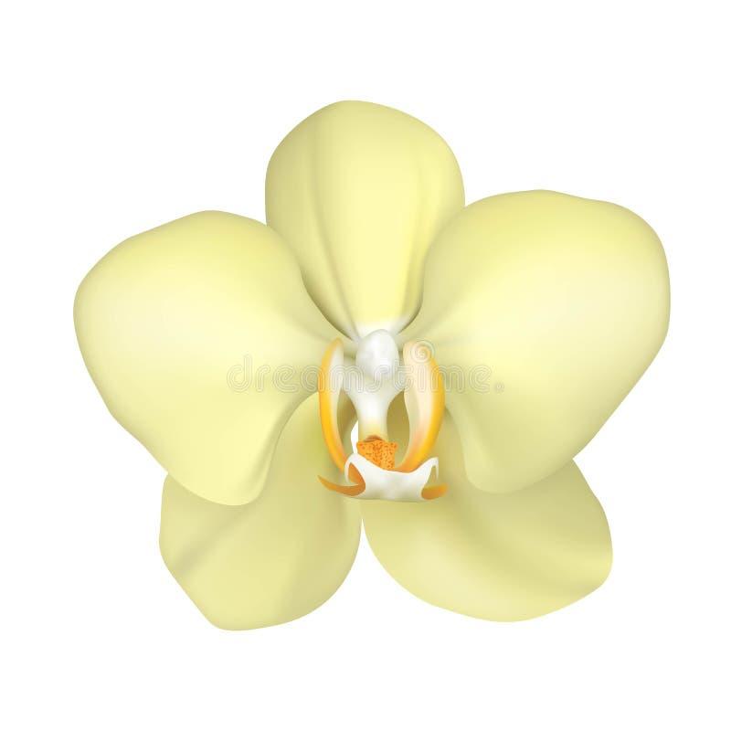 Vitt isolerat tropiskt exotiskt realistiskt för blomma stock illustrationer