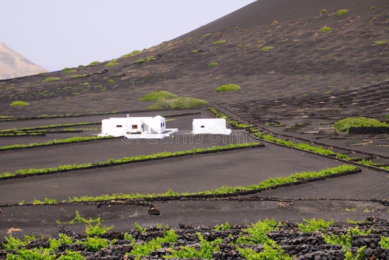 Vitt lantgårdhus i växande område för vin på torr jordning för vulkanisk aska nära Uga, Lanzarote arkivbild