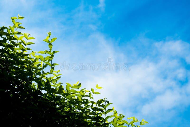 Vitt moln i härlig klar blå himmel med växten på frontend det är den soliga dagen i regnig säsong royaltyfri fotografi