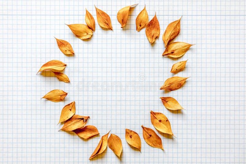 Vitt rasterark som rundas av torra sidor för guling, med kopieringsutrymme i mitten royaltyfri foto
