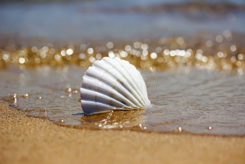 Vitt snäckskal på sanden nära vattnet arkivbild