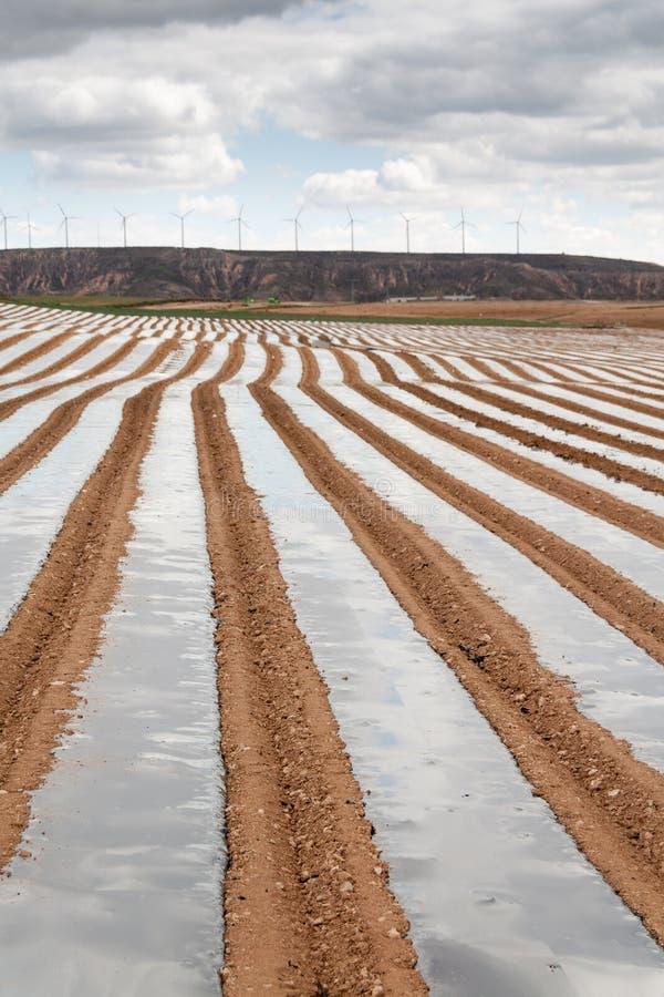 Download Vitt Sparrisfält I Tudela, Navarra (Spanien) Fotografering för Bildbyråer - Bild av produktion, jordning: 27277411