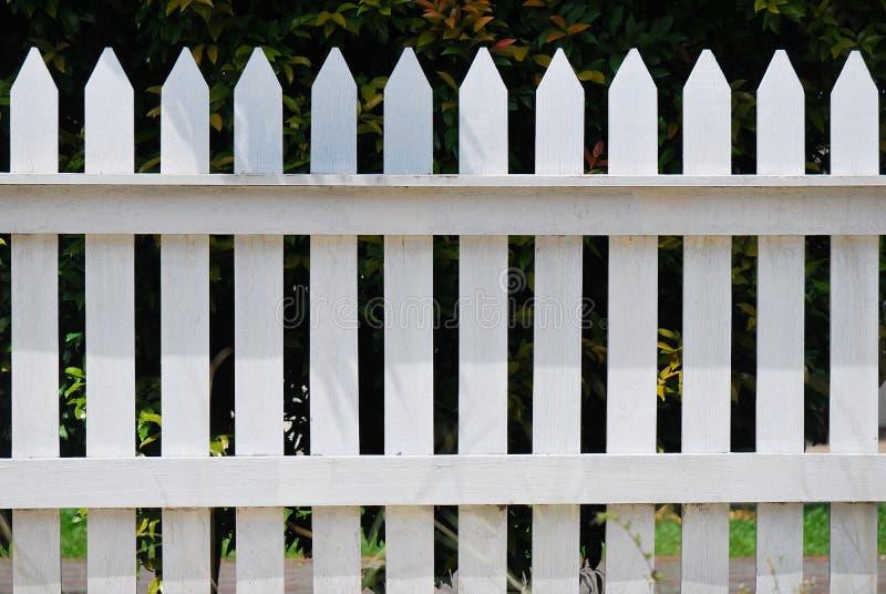 Vitt staket royaltyfri bild