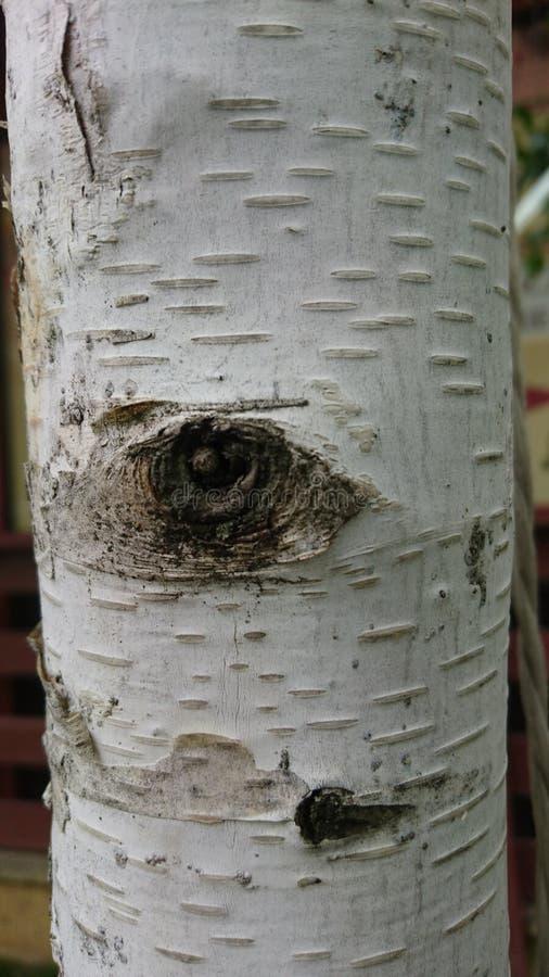 Vitt texturerat slut upp detaljer för natur för trädskäll arkivfoto