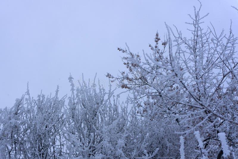 Vitt trä som täckas med frostigt landskap för frost arkivfoton