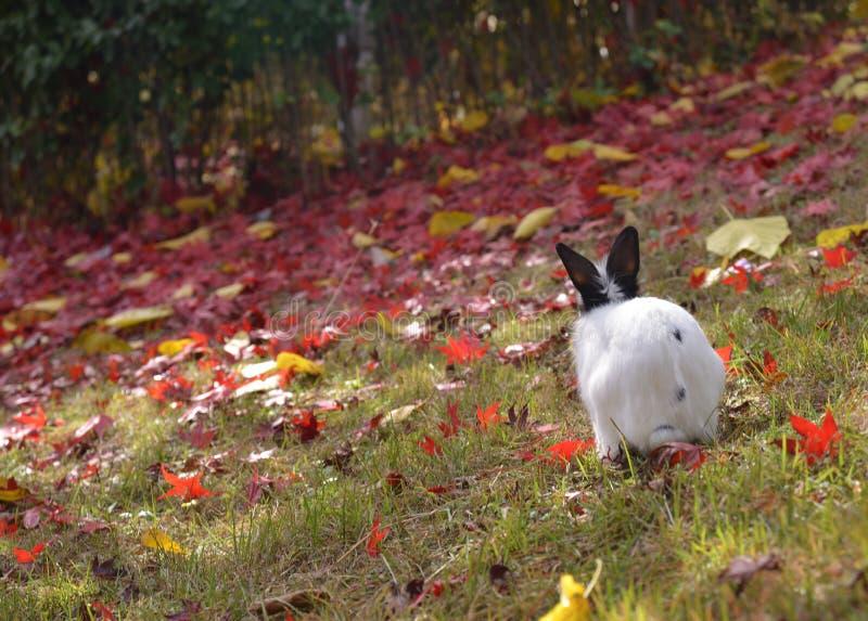 Vitt träd för trädgård för kaninNamisum ö royaltyfria foton