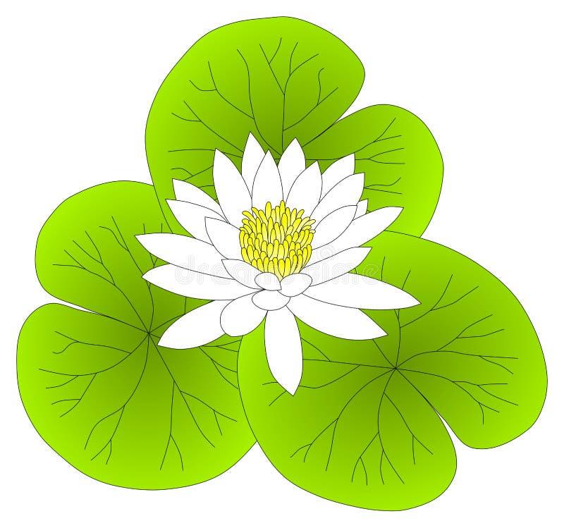 Vitt vatten Lilly Lotus Leaves royaltyfri illustrationer
