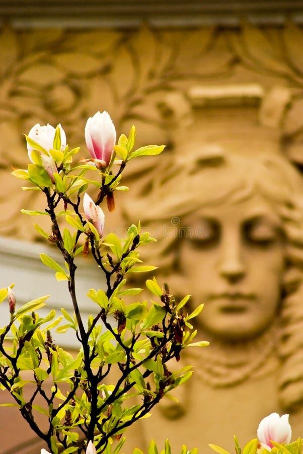 vitus st весны prague собора Чехия стоковые фотографии rf