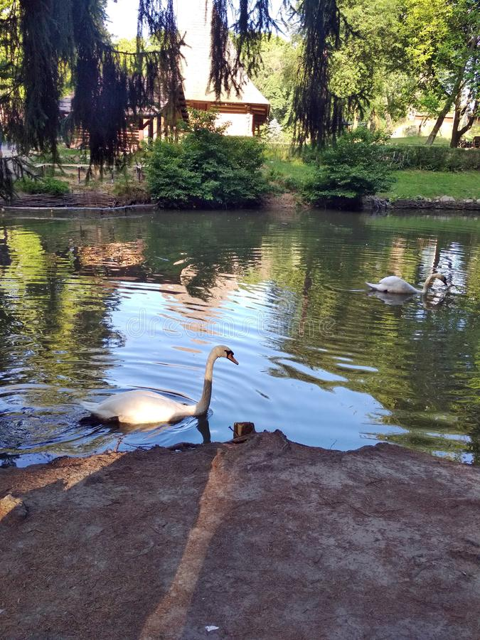 ? ` viv Τοπία της χλωρίδας και πανίδα των περιοχών πάρκων της πρωτεύουσας της δυτικής Ουκρανίας στοκ εικόνα