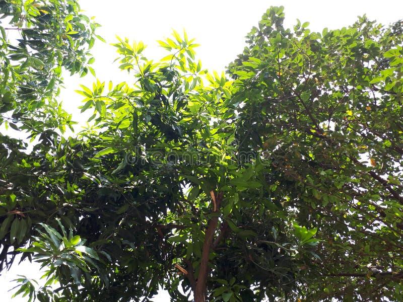 Viva com as folhas verdes frias imagens de stock royalty free