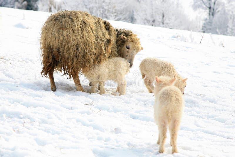 Viva sull'azienda agricola entro l'inverno. immagine stock