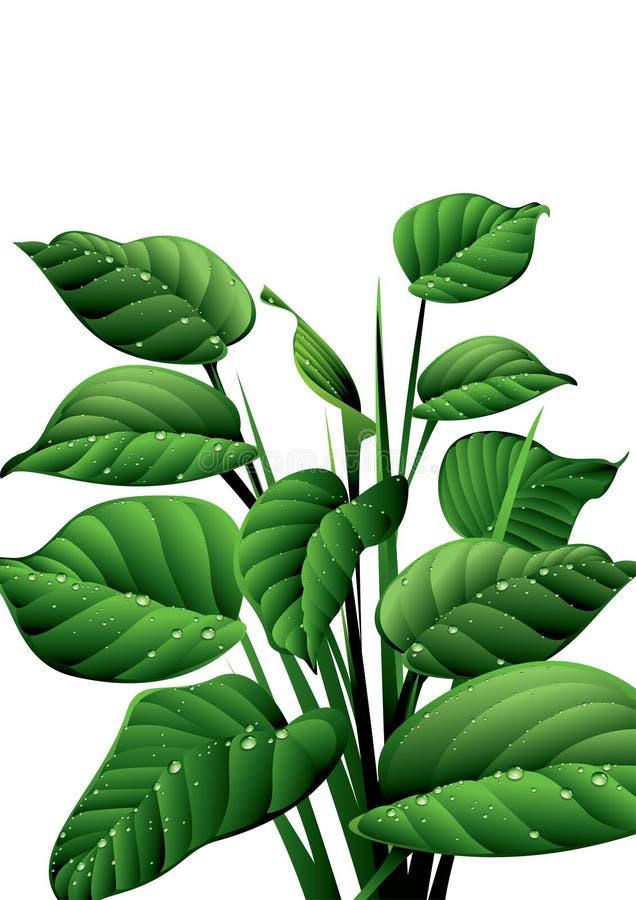 Vivacité verte illustration libre de droits