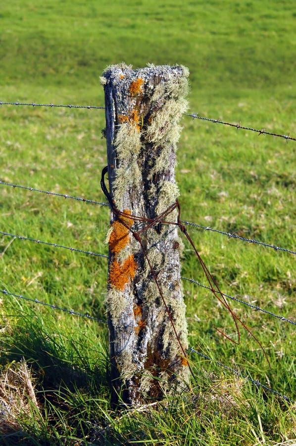 Vivant avec le lichen photographie stock libre de droits