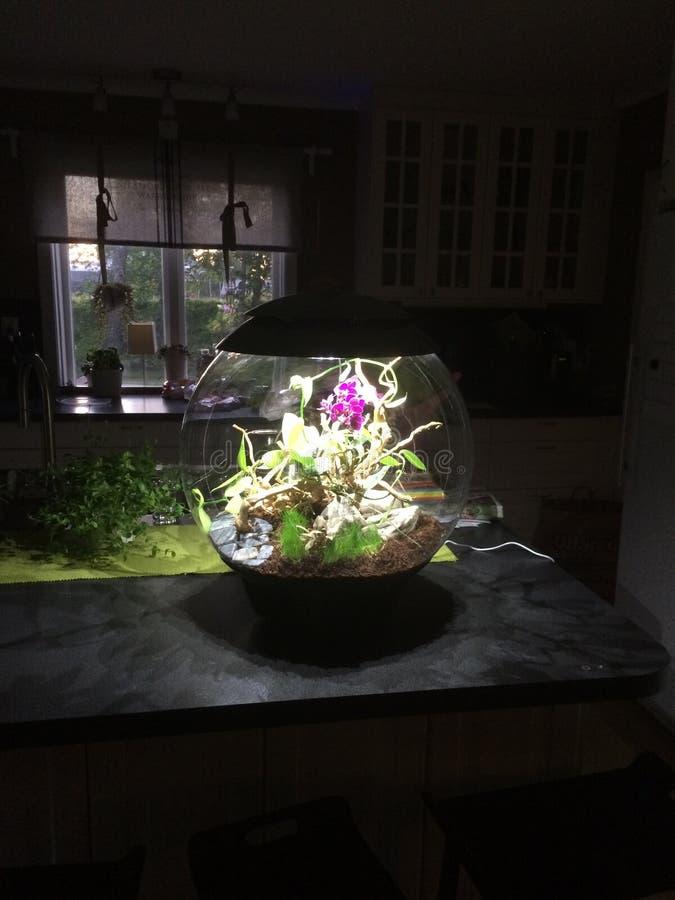 Vivarium/mini-serre de conception avec des orchidées photo stock