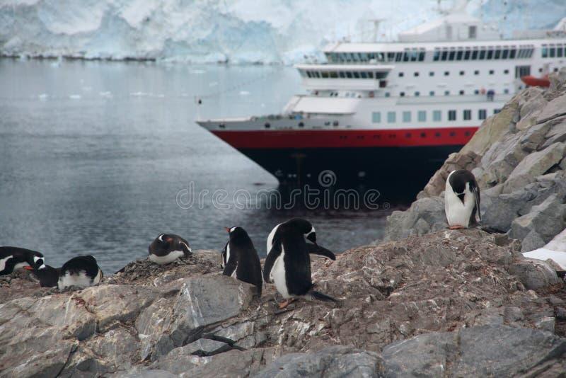 Viveiro do pinguim de Gentoo com navio de cruzeiros imagens de stock