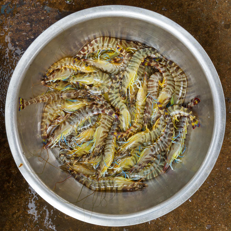 Vivem e os tigerprawns muito frescos em um mercado vietnamiano fotos de stock