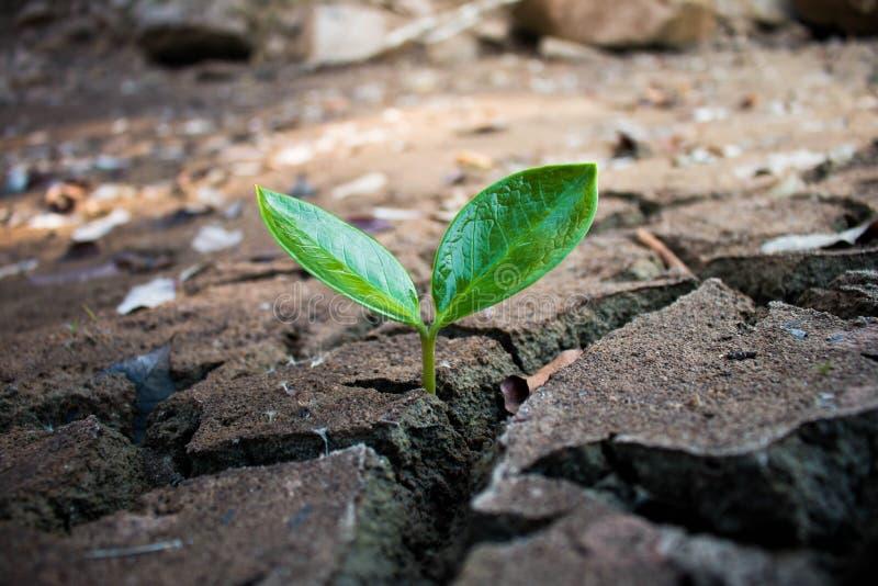 Vivendo con la siccità dell'albero, terra della crepa fotografia stock libera da diritti