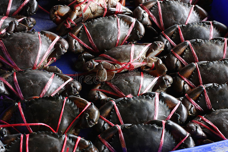 Vivent le crabe prêt pour que la vente fasse cuire images stock