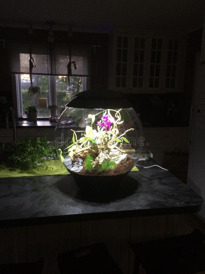 Vivero/terrario del diseño con las orquídeas foto de archivo