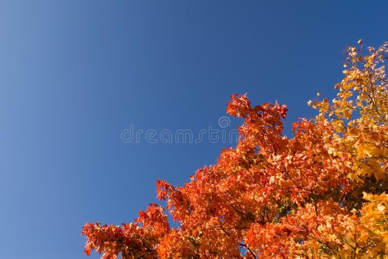 Vivid Autumn Leaves Stock Photos