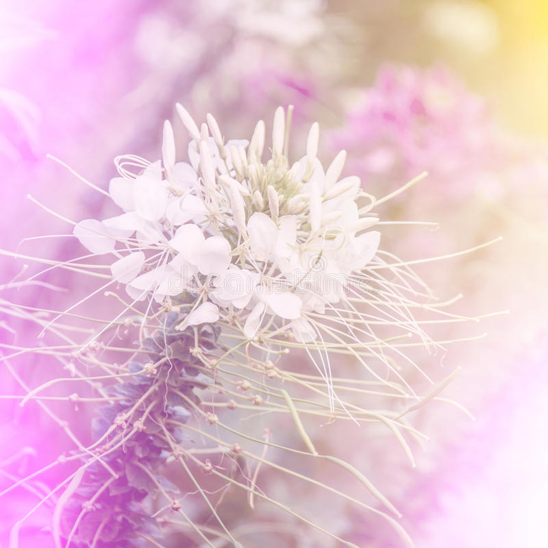 Such Gorgeous Colors And Softness: Vivid Color Beautiful Wild Flowers In Soft Style. Stock